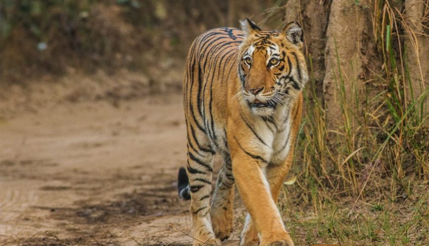 Corbett Getaway for Wildlife Lovers - 2 Nights 3 Days